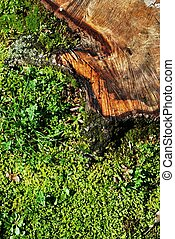 Tree stub in the grass - Detail of cut tree trunk in the...