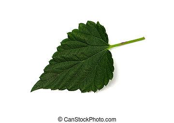One hop leaf