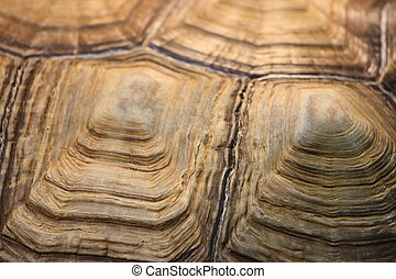 Turtle Shell - Close up of a turtle shell.
