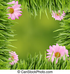 Green and pink daisy background or border - Pink daisies on...
