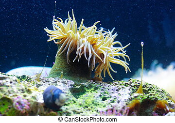 Sea anemone - Beautiful actinia in Omaha zoo aquarium