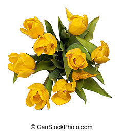 yellow tulips on top isolated with clipping path.