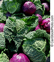 Purple and Green Cabbages - A collection of large, beautiful...