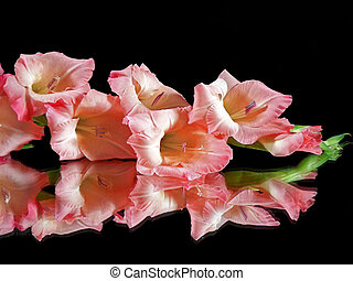 reflexión,  gladiola