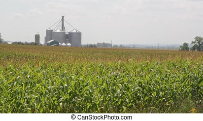 Cornfield with silos. - Cornfield with silos and farm in the...