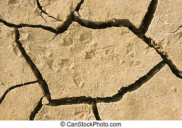 Animal footprints in dried earth