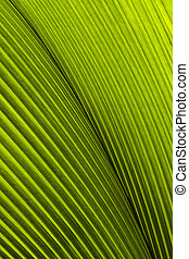 Close up of Tropical Green Leave Texture use as a Background