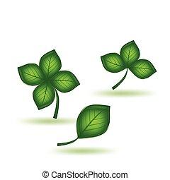 Set green leaf. Vector