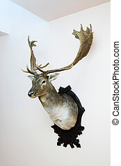 Deer mount - Deer trophy mounted on a wall - still