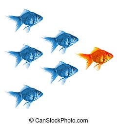 goldfish showing leader individuality success or motivation...