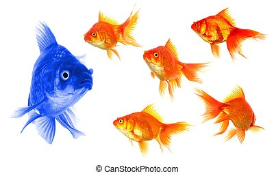 goldfish - standing out of the crowd concept with individual...