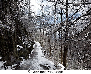Snowy hike in Smoky Mountains