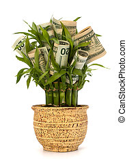 Money growing concept Money banknotes growing in flowerpot...