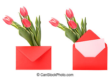 greeting card with pink tulips isolated on white background...