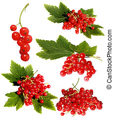 Red currant - Different variants of a red currant isolated...