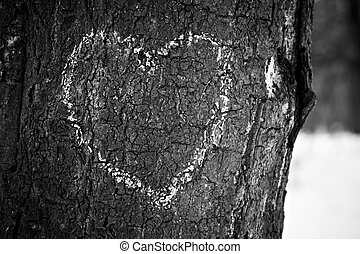 Heart drawn on tree trunk, monochrome image