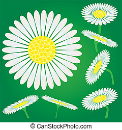 Set of Chamomile flowers, camomile isolated on green background, vector illustration