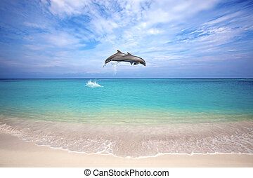 Dolphins jumping - Two dolphins jumping in the Caribbean sea