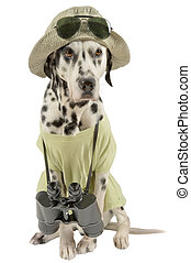 Charlie the dog - Dalmatian traveler. Acting dog.