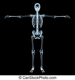 Human Skeleton X-Ray Image - radiological image of the human...