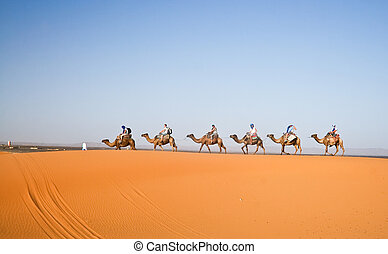 Camel caravan going through the sand dunes in the Sahara Deser