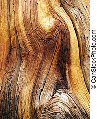 wavy wood grain - knotted dead pine tree trunk showing wavy...
