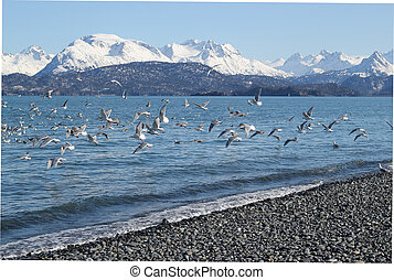 A flock of sea gulls flying over the water with snow covered...