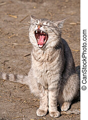 Cat with open mouth sitting on the ground