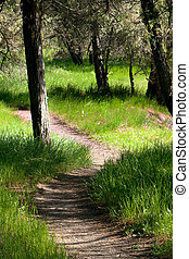 Path in the Woods - A quiet, meandering path in the woods of...