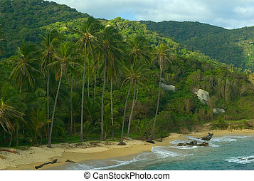 Palm Trees on Colombian Beach - Palmtrees on the sandy shore...