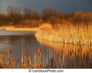 Marsh Before Storm in Pennsylvania - dramatic light before a...