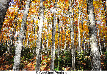 Forest tree autumn yellow and green background