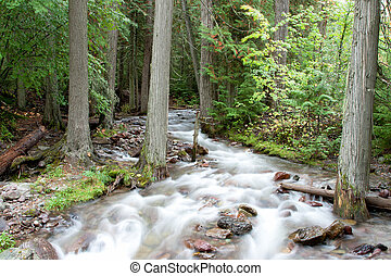 Forest Stream - A stream coursing through the forest at...
