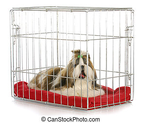 dog in a crate yawning - shih tzu bored of being crated on...