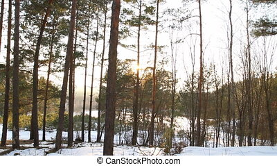 winter forest, the sun