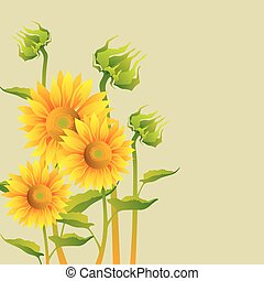 Beautiful yellow Sunflowers on sepia background