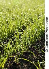 verão, pequeno, árvore, verde, capim, chão
