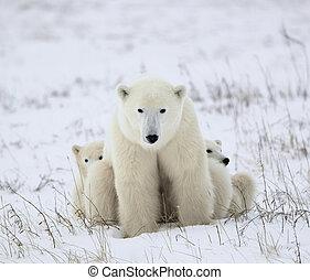 szczeniaki, polarny,  she-bear