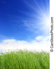 green grass under blue sky background