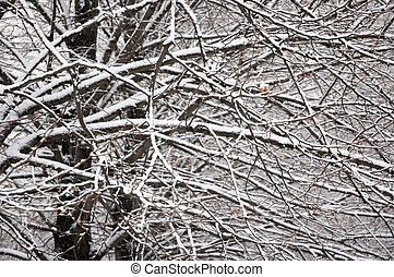 background of branches covered with snow