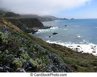 Jade Cove, California, USA - Foggy spring morning at Jade...