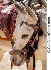 Petra riding Donkey - Petra donkey