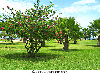 Park with Hibiscus and Palm Trees