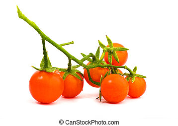 mini tomato isolated white background