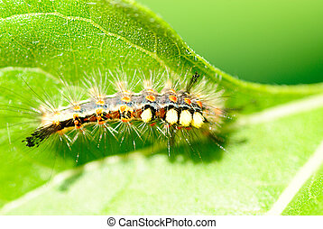 Bright caterpillar on green vegetables