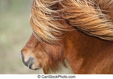 Mane and jowl - Face oa a small pony in France, on a sunny...