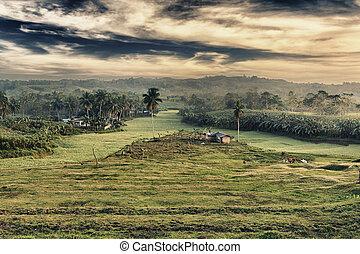 Rural landscape at sunset time Bohol Philippines