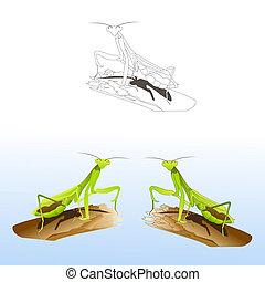Praying mantis - Set of praying mantises in different styles