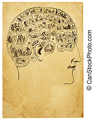 Old Phrenology Illustration - A vintage illustration from an...