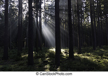 Sunray 4 - Early sunray in a shady forrest